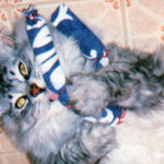 C.J. adores his Hot Cats Deluxe toy