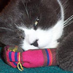 Sox has a mellow moment with his favorite catnip toy